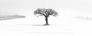 Lone Tree, Kingthorpe